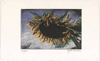 Peter Wever | Sonnenblume