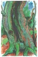 Günter Grass Bäume 2