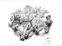 Günter Grass verschiedene Pilze