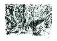 Günter Grass Doppelt im Wald