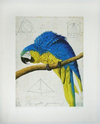 Wolfgang Zelmer | Papagallo geometrico II