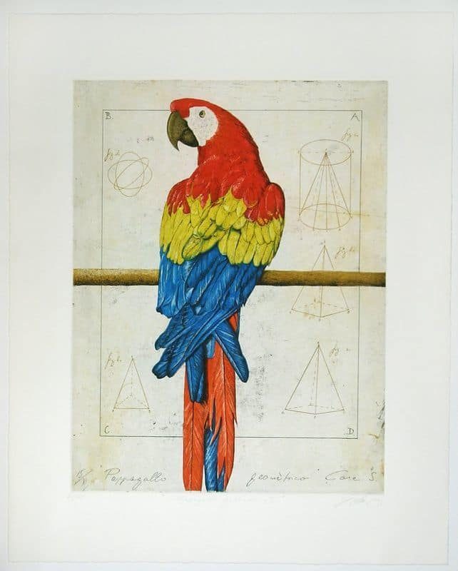 Wolfgang Zelmer | Papagallo geometrico I