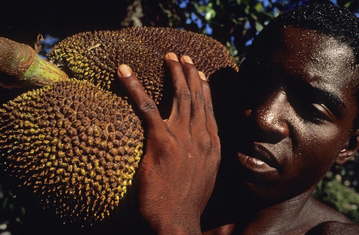 Micha Ende Jaca Fruit